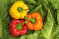 Fresh Bell Peppers Royalty Free Stock Photo