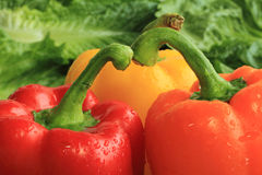 Fresh Bell Peppers Royalty Free Stock Images