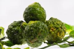 Fresh bergamot herb Stock Photography