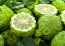 Fresh bergamot. Herb food and generic vegetation royalty free stock photo