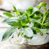 Fresh bergamot, mint leaves in a glass cup Royalty Free Stock Photo