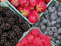 Fresh Berries. On display at the farmers market Royalty Free Stock Photo