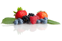 Fresh Berries. Mix of different fresh berries Stock Images