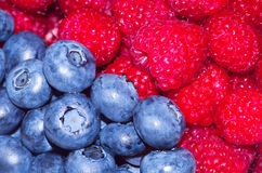 Fresh berries. A fresh and appetizing berries Stock Image