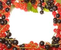 Fresh berries as frame Royalty Free Stock Image