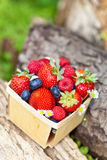 Fresh berries. Assortment of fresh berries in basket Royalty Free Stock Images