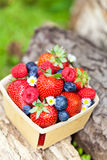 Fresh berries. Assortment of fresh berries in basket Stock Image