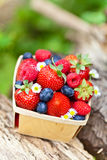Fresh berries. Assortment of fresh berries in basket Stock Photos