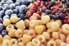 Fresh berries assortment. Close up Stock Images