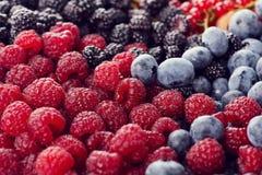 Fresh berries assortment Stock Images