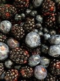 Fresh Berries Background. Blackberries and Blueberries make a Berry background royalty free stock photo