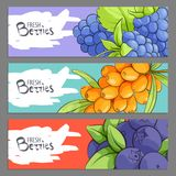 Fresh berries banners royalty free stock photos