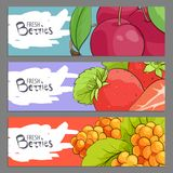 Fresh berries banners royalty free stock photo