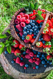 Fresh berries in basket Stock Photo