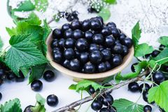 Fresh berries of black currant in a plate on a table. For a diet and saturation with vitamins royalty free stock photo