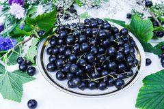 Fresh berries of black currant in a plate on a table together with cornflowers . For a diet and saturation with vitamins.  stock images