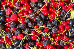 Fresh berries of blackberries, raspberries, red currant and blac Royalty Free Stock Images