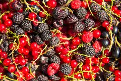 Fresh berries of blackberries, raspberries, red currant and blackcurrant Stock Images