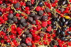 Fresh berries of blackberries, raspberries, red currant and blackcurrant. For background Stock Image