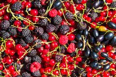 Fresh berries of blackberries, raspberries, red currant and blackcurrant Royalty Free Stock Images