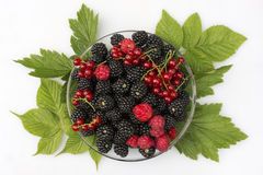 Fresh berries of blackberry, raspberry and red currant Royalty Free Stock Photo