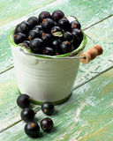 Fresh Berries of Blackcurrant Stock Image
