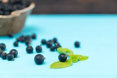 Fresh berries on blue table with mint leaf. Fresh juicy blueberries scattered against blue table with mint leaf royalty free stock images