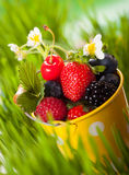 Fresh berries. In  bucket on the grass Stock Photos