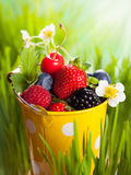 Fresh berries. In  bucket on the grass Stock Photography