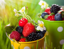 Fresh berries. In  bucket on the grass Stock Images
