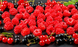 Fresh berries of cherry, raspberries, red currant and black currant Stock Photos