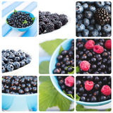 Fresh berries. Collage. Royalty Free Stock Photos