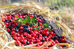 Fresh berries cranberries and blueberries. The a fresh berries cranberries and blueberries Stock Image