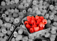 Fresh Berries on Display Stock Photography