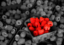 Fresh Berries on Display Royalty Free Stock Photo