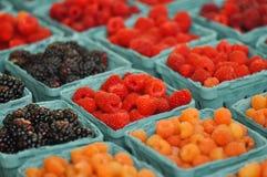 Fresh Berries at Farmers Market Stock Image
