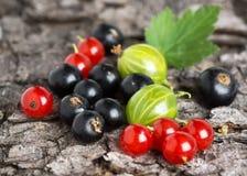 Fresh berries fruit background Stock Photos