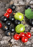 Fresh berries fruit background Stock Images