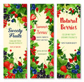 Fresh berries and fruits vector banners set. Berries vector banners. Farm or garden harvest of of blueberry and black currant and cranberry, fresh raspberry and Royalty Free Stock Image