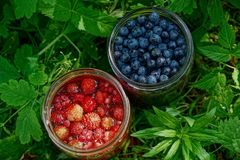 Blueberries and strawberries in glass jars in green grass. Fresh berries in glass jars in green grass Royalty Free Stock Photography