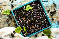 Fresh berries of golden currant in blue boxl on wooden background. Ribes aureum known by the common names black currant clove cur Royalty Free Stock Photography