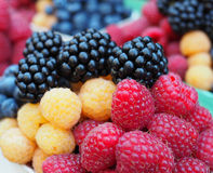 Fresh berries include  sweet raspberry and blackberry. Mix berries include  sweet raspberry and blackberry Royalty Free Stock Photos