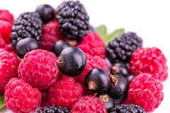 Fresh berries isolated. Fresh berries: raspberries, blackcurrants, mulberries on white Royalty Free Stock Photos