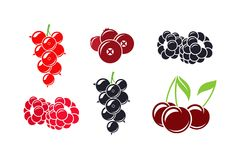 Fresh berries. Isolated raspberry currant cherry cranberry and blackberry on white background Stock Photos