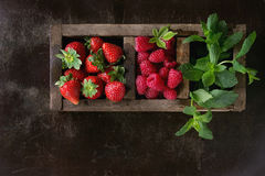 Fresh berries and mint Stock Photography