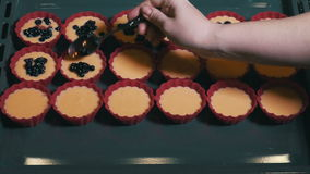 Fresh Berries Put in Form with Raw Cakes stock video
