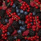Fresh berries. Fresh raspberries, blackberries and currants closeup Royalty Free Stock Photo