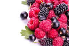 Fresh berries. Fresh berries: raspberries, blackcurrants, mulberries on white Royalty Free Stock Image