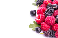 Fresh berries. Fresh berries: raspberries, blackcurrants, mulberries on white Stock Photography