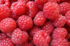 Fresh berries Raspberry European, Rubus idaeus Royalty Free Stock Image